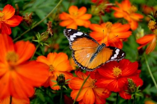 Оранжевый цвет в природе