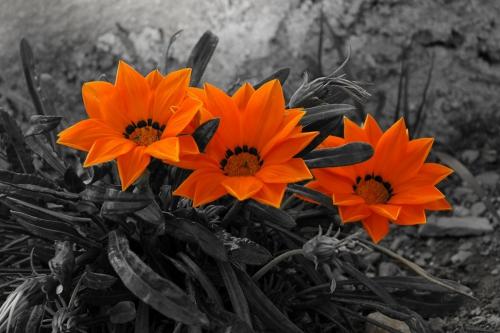 Серый цвет в природе