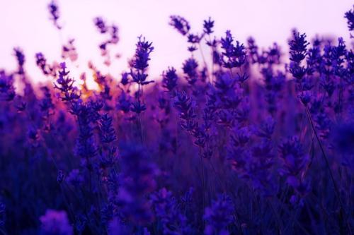 Синий цвет в природе